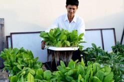 Chàng kỹ sư Nguyễn Văn Cao kiếm tiền tỷ từ rau sạch